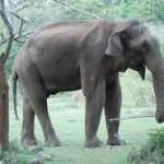 Elefantul şi musca