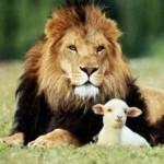 Povestea puiului de leu