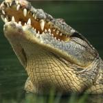 Povestea raului cu crocodili