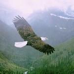 Micuţul vultur
