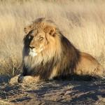Fabula leului şi a sconcsului