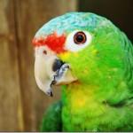 Femeia singuratică şi papagalul