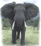 Păduchele şi elefantul
